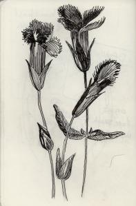 Ink in Moleskine